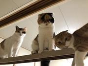 猫ネコねこ時々ワンコ