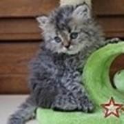 RITAと猫たちの日々