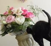 保育園のねこさんと花と