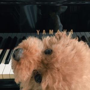 アダージォな毎日~愛犬と一緒♪