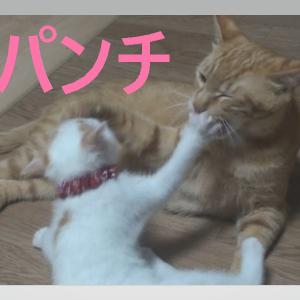 ブロッコリーの猫パンチ