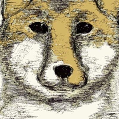柴犬くんさんのプロフィール