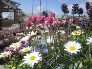 ハウス工藤園芸のブログ