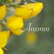 Anemos(アネモス)フラワーエッセンスの情報をお届けするサイト
