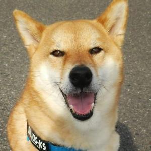犬と人との幸せ暮らし