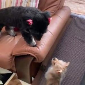 ミックス犬の多頭飼い初心者ブログ