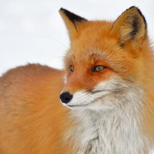 FOXの株式投資日記