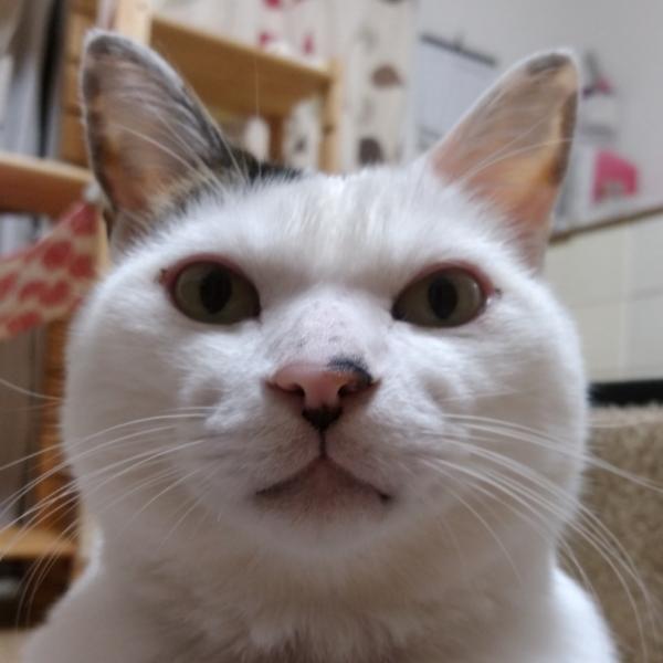 猫魚さんのプロフィール