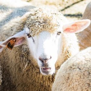 ついてない羊子の絶好調日記