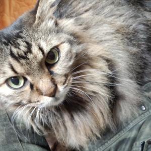 赤尾の保護猫活動&家猫日記