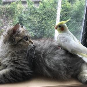 ネコとオカメと時々人間。