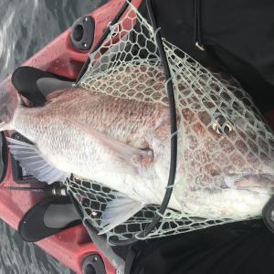 カヤックフィッシングで山陰の魚を釣るブログ