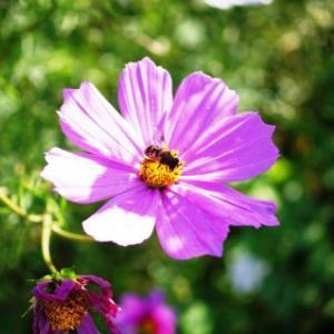 養蜂 はじめ〼