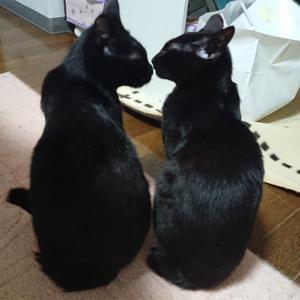 おれもおまえも黒猫