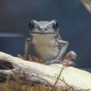 爬虫類両生類 餌・すみか研究所