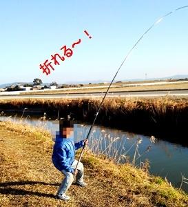 ひよまろの 延べ竿鯉釣り日記