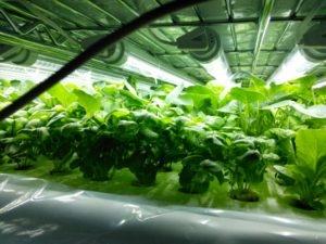 超低コストLED植物工場を自作する