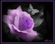 ~purple・rose の ~simple・life~