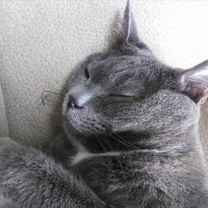 愛知発!保護猫の里親募集