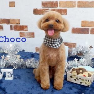 トイプードルのチョコ&モコのお気軽ブログ