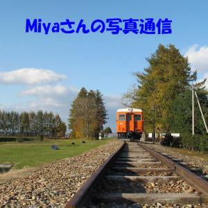 Miyaさんの写真通信
