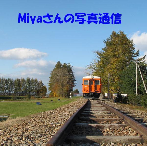 Miyaさんのプロフィール