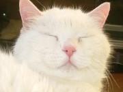 静岡県焼津市の猫のボランティア団体「ネコ会」の代表ブログ・気ままに・・・にゃん!