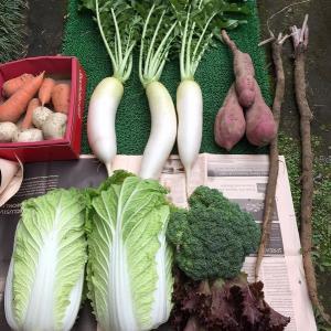 野菜づくり奮闘記