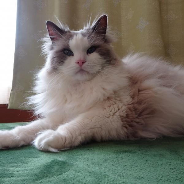 猫大好き「毎日さくらふぶき」