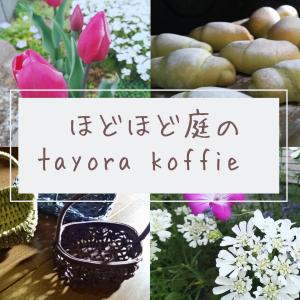 ほどほど庭のtayora koffie
