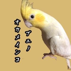 bueno tokyo オカメインコ専門ブリード