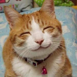 野良猫岡山のネットニュース