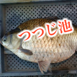 【岐阜県のヘラブナ釣り専門管理池】つつじ池スタッフブログ