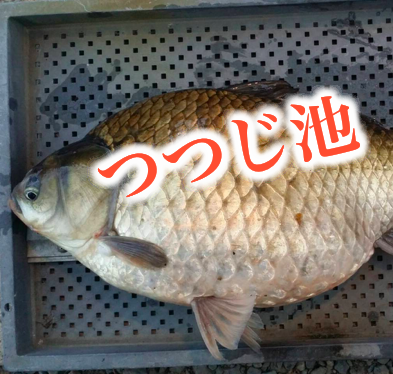 【岐阜県のヘラブナ釣り専門管理池】つつじ池さんのプロフィール