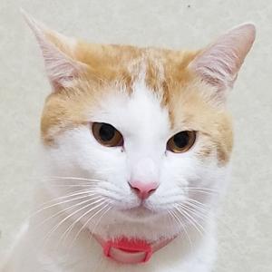 【猫まとめ】猫のみゅーみゅーちゃん