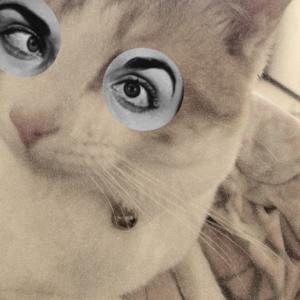 元保護猫ロイの日記