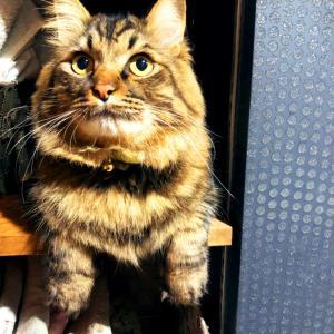 えと的日常〜猫がブログ始めました〜