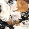 僕 と ねこ と ネコ の お絵かきの時間