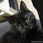 飼い猫日記(猫と楽しく暮らす方法&ヒメの想い出保存版)