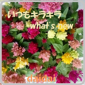 -いつもキラキラ-what's new