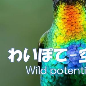 Wild Potential | わいぽて -空