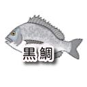 茨城のクロダイ!ウキフカセ釣りblog