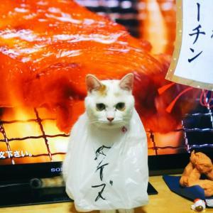 フルタイムパートが武蔵野大学通信で学ぶ
