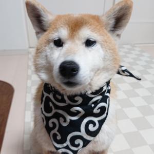 犬乙女のマンガ日記