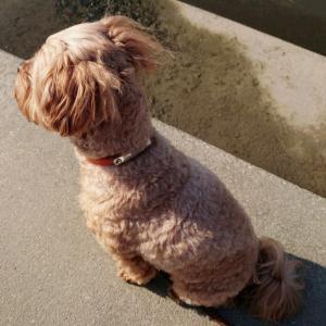 犬のブログ 犬派ですが何か?