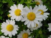 野の花のブログ「ほっとカフェ」