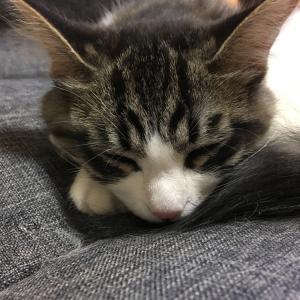 猫三昧な生活