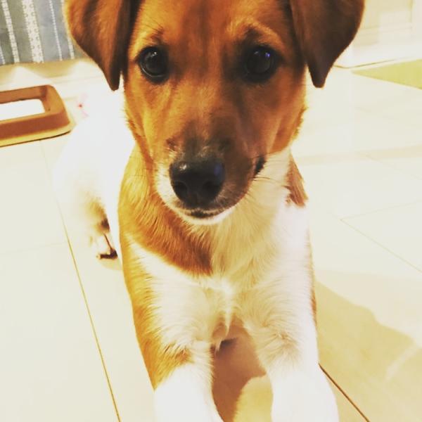 ★☆愛犬ベルと気ままな私と時々夫のワン!!だふるLife☆★
