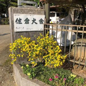 鳥猟犬訓練専門犬舎 佐倉犬舎のブログです