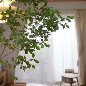 Koti ~おうちしごと~